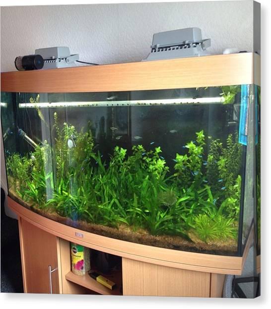 Fish Tanks Canvas Print - Update Of My Aquarium. Started Dosing by Liam James Mcdonald