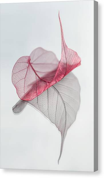 Minimalism Canvas Print - Uplifted by Maggie Terlecki