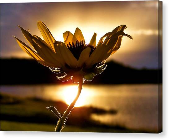 Flower Canvas Print - Uplifting by Karen Scovill