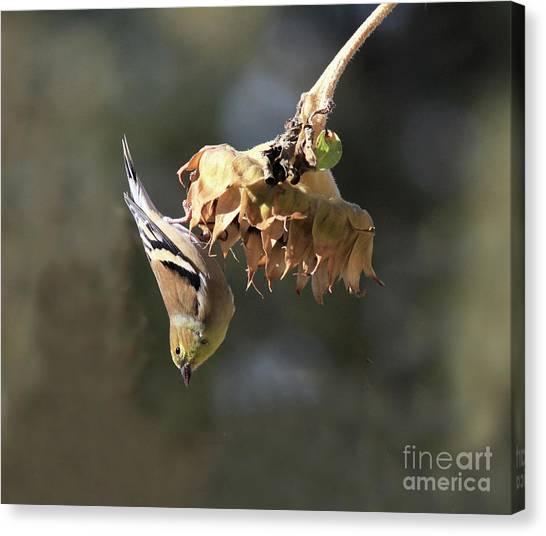 Canvas Print - Upside Down by Gary Wing