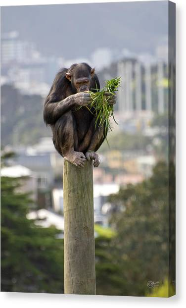 Urban Jungle Canvas Print by Andrea Cadwallader