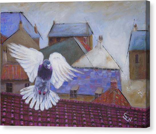 Urban Pigeon Canvas Print