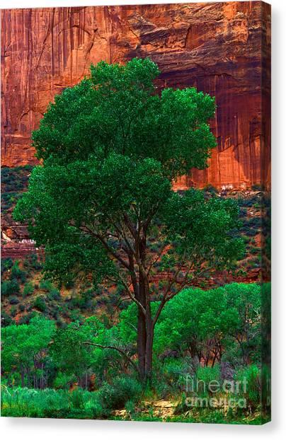 Utah - Cottonwood Canvas Print