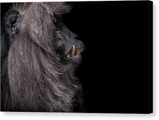 Monkeys Canvas Print - Vanity by Paul Neville