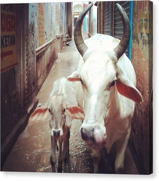 Ganges Canvas Print - #varanasi#india#ganges#cow by Arare Chan