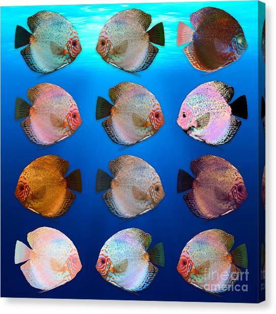 Freshwater Aquarium Fish Canvas Prints (Page #6 of 9)   Fine Art America