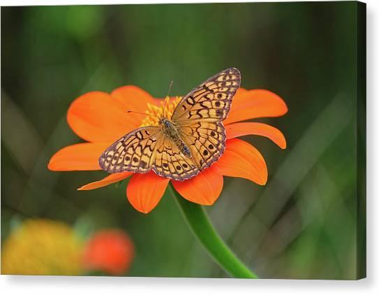 Variegated Fritillary On Flower Canvas Print