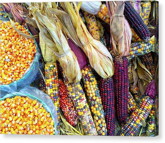 Peruvian Canvas Print - Variety Of Colorful Corn by GoodMood Art