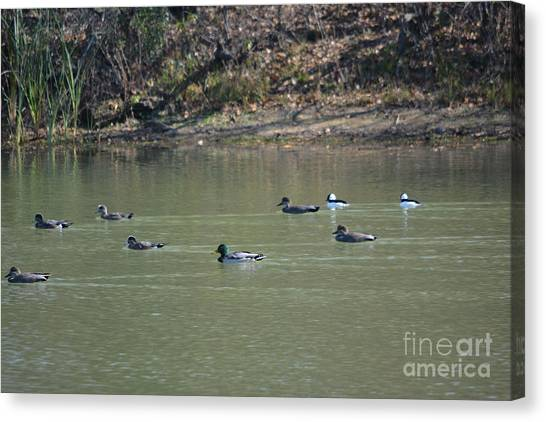 One Direction Canvas Print - Variety Of Ducks 2 by Ruth Housley