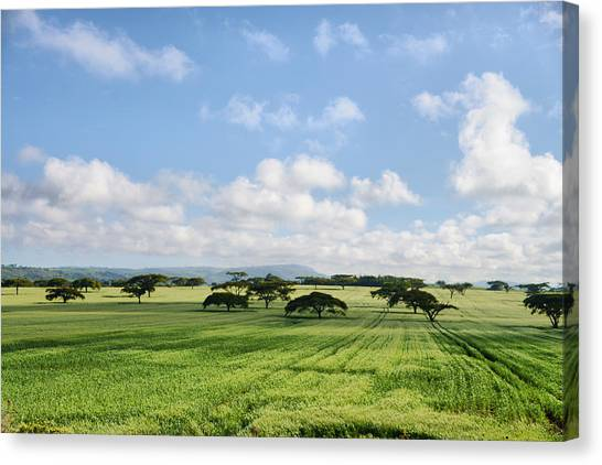 Vegetation Canvas Print
