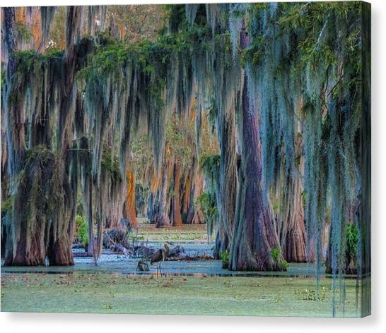 Unveiling The Secrets Of Da Swamp At Cypress Island Preserve Canvas Print