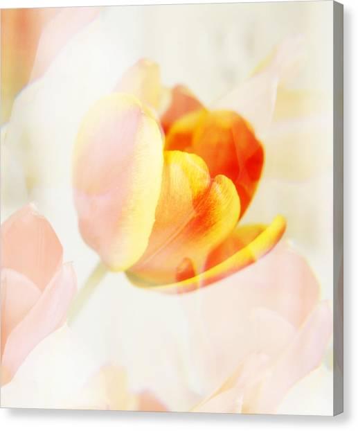 Veiled Tulip Canvas Print