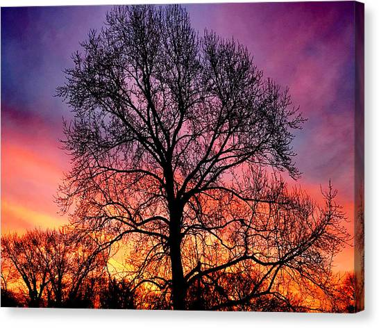 Velvet Mood Canvas Print