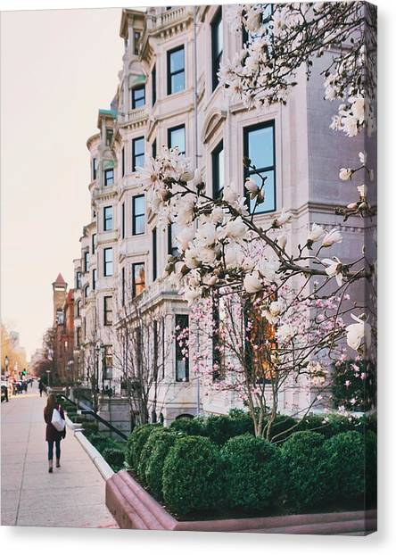 Canvas Print - Vendome With Magnolias by Brian McWilliams
