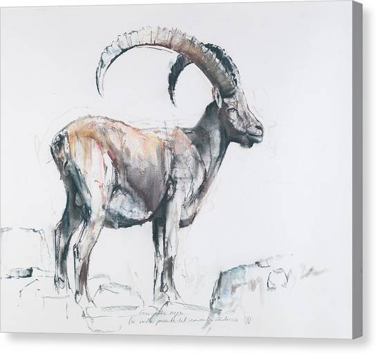 Goats Canvas Print - Venerando Stambecco by Mark Adlington