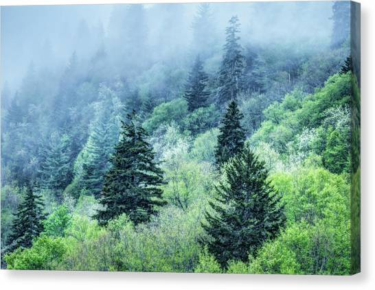 Verdant Forest In The Great Smoky Mountains Canvas Print