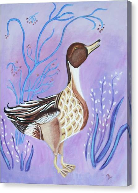 Version Of A Pintail Canvas Print