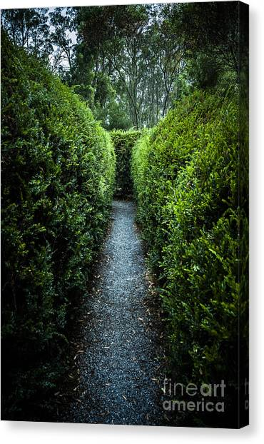 Maze Puzzle Canvas Print - Vertical Outdoor Photograph Of A Garden Labyrinth by Jorgo Photography - Wall Art Gallery