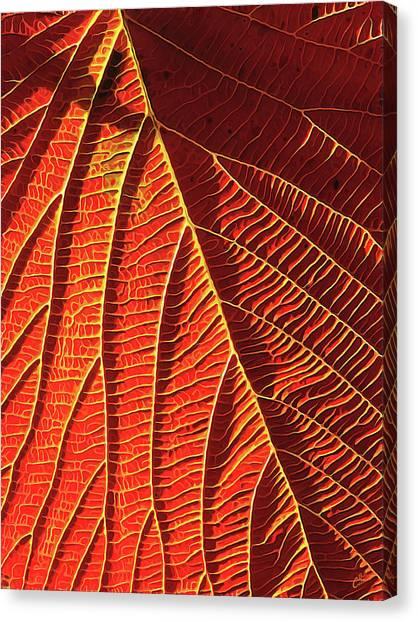 Vibrant Viburnum Canvas Print