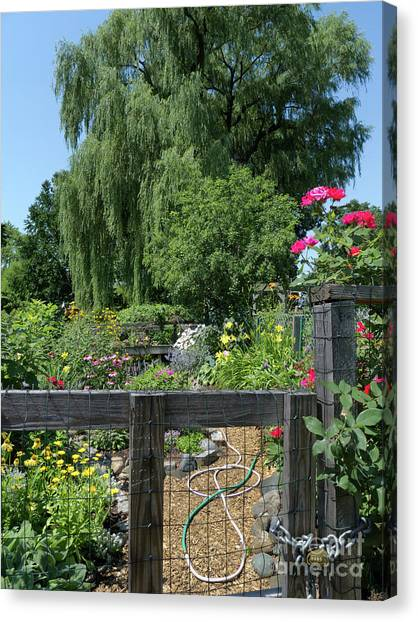 Victory Garden Lot And Willow Tree, Boston, Massachusetts  -30958 Canvas Print