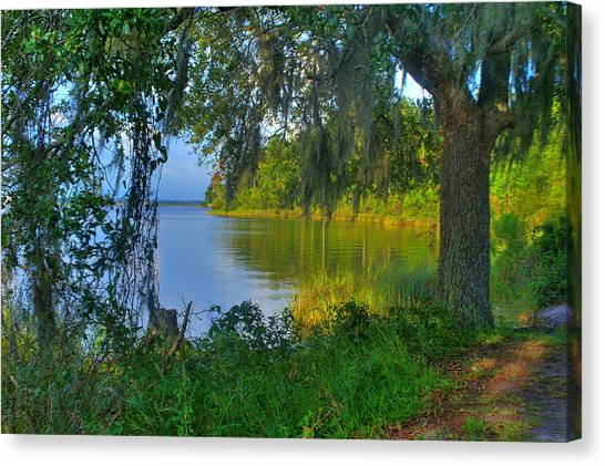 View Under The Spanish Moss Canvas Print