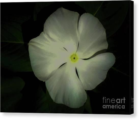 Vinca Bloom Night Glow Canvas Print