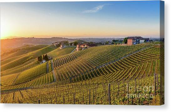 Vineyard At Barbaresco, Italy Canvas Print