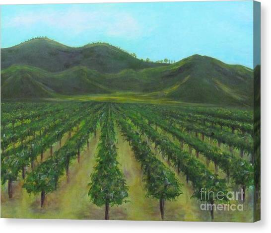 Vineyard Drive By Canvas Print