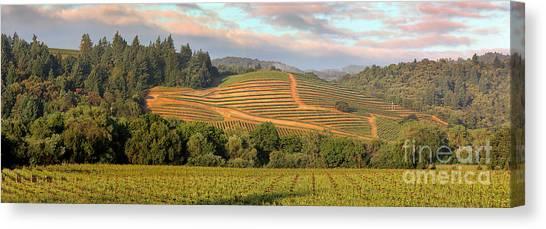 Vineyard In Dry Creek Valley, Sonoma County, California Canvas Print