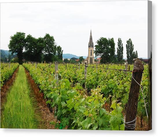 Vineyard In France Canvas Print