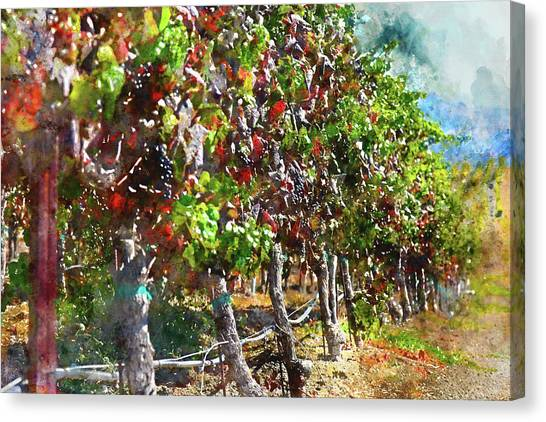 Grapes Canvas Print - Vineyard In Napa Valley California During The Fall by Brandon Bourdages