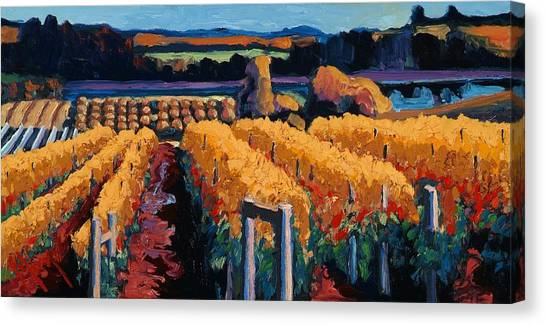 Wine Art Canvas Print - Vineyard Light by Christopher Mize