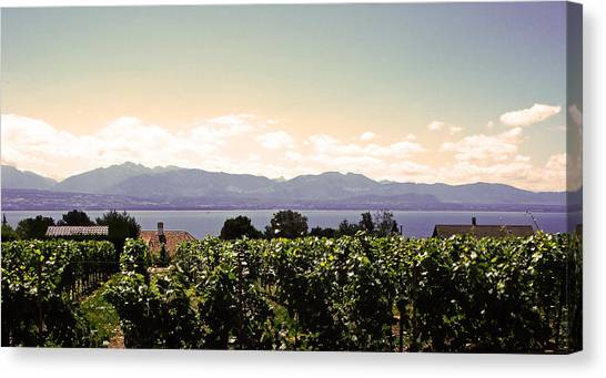 Vineyard On Lake Geneva Canvas Print