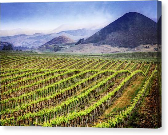 Canvas Print featuring the photograph Vineyard by Scott Kemper