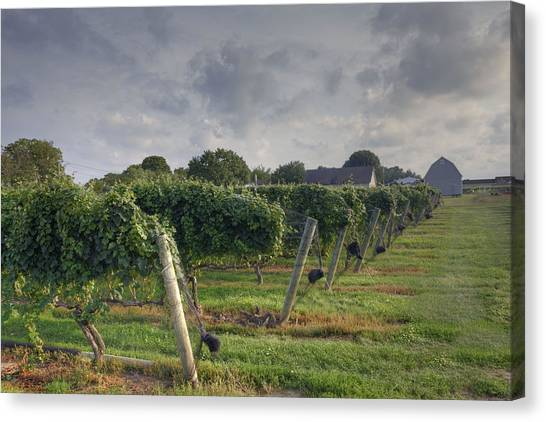 Vineyard With  Barn Canvas Print