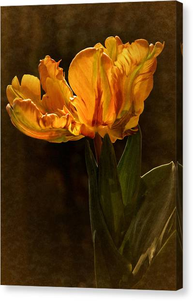 Vintage 2017 Tulip Canvas Print