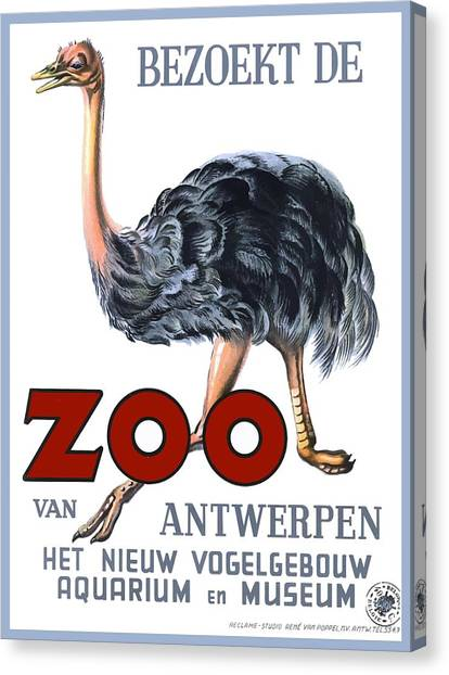 Ostriches Canvas Print - Vintage Antwerp Zoo Ostrich Advertising Poster by Retro Graphics