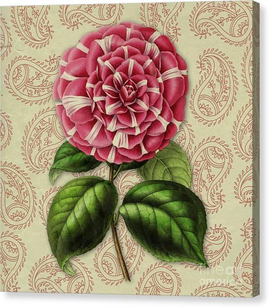 Camellia Canvas Print - Vintage Botanical Pink Flower Camellia Japonica by Amy Cicconi