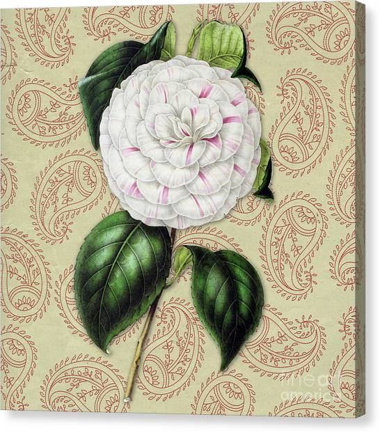 Camellia Canvas Print - Vintage Botanical White And Pink Flower Camellia Japonica by Amy Cicconi