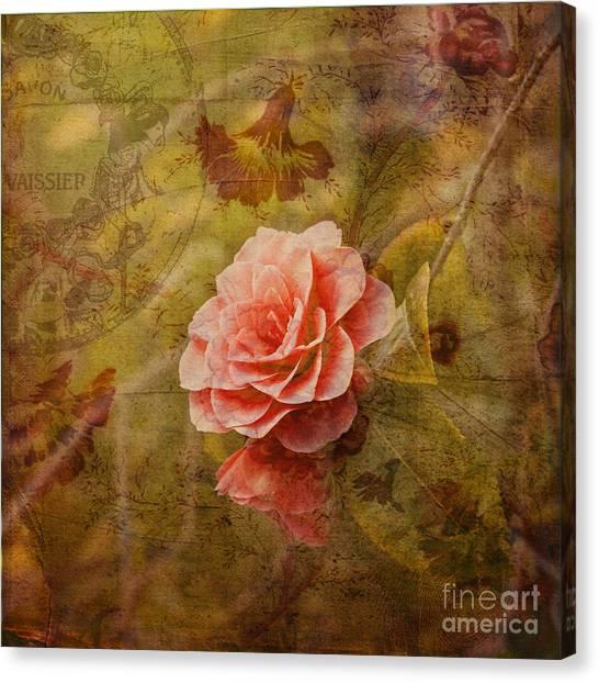 Camellia Canvas Print - Vintage Camellia by Liz  Alderdice