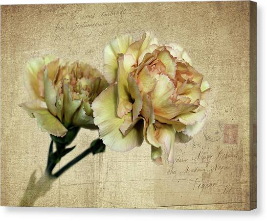 Vintage Carnations Canvas Print