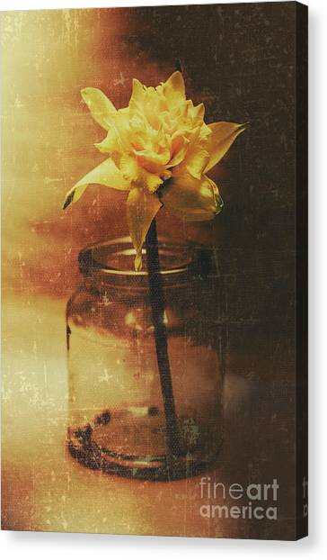 Daffodils Canvas Print - Vintage Daffodil Flower Art by Jorgo Photography - Wall Art Gallery