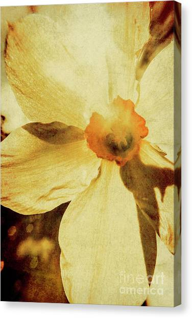 Daffodils Canvas Print - Vintage Daffodil Haze by Jorgo Photography - Wall Art Gallery