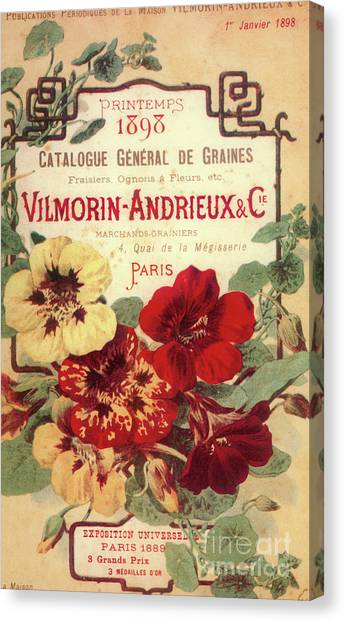 Amaryllis Canvas Print - Vintage Flower Seed Cover Paris Rare by Mindy Sommers