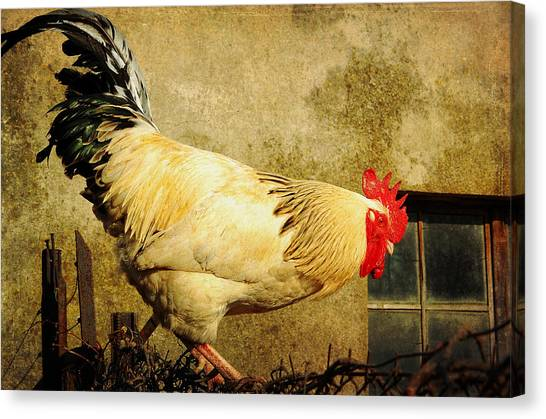 Vintage Rooster Canvas Print