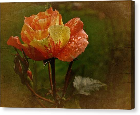 Vintage Sunset Rose Canvas Print