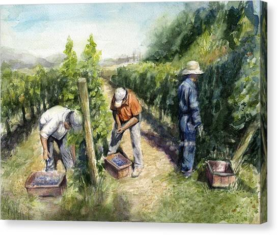 Wine Art Canvas Print - Vineyard Watercolor by Olga Shvartsur