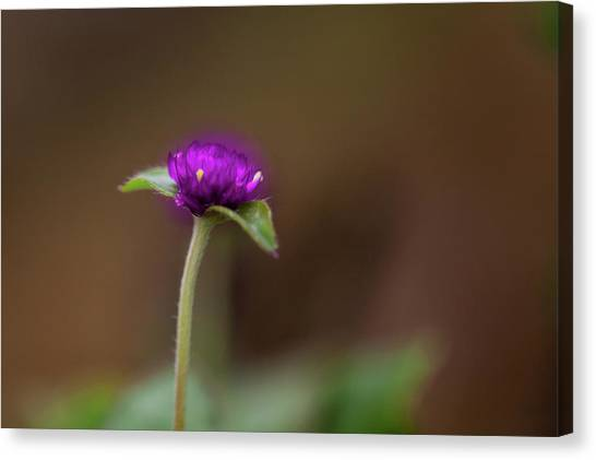 Violet Flower Canvas Print