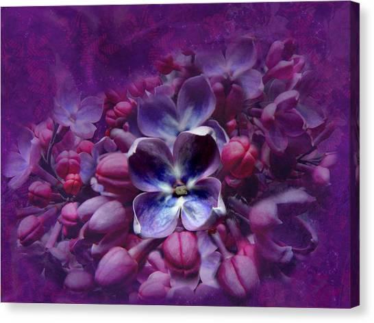 Violet Lilac Canvas Print