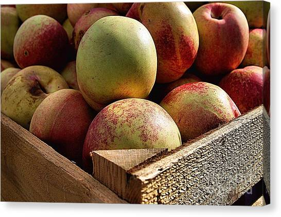 Virginia Apples  Canvas Print